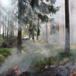 Skogsbrand