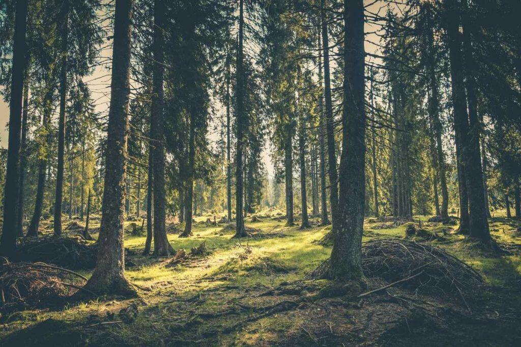 Överlevnad i skogen